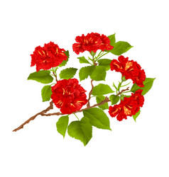 Branch red hibiscus tropical flowers vector
