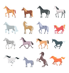 Horse breeds strong beautiful domestic animals vector