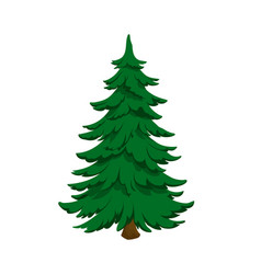isolated image fir green pine in cartoon style vector image