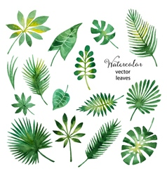 Set watercolor green leaves vector