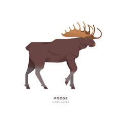 wild moose elk isolated animal cartoon vector image