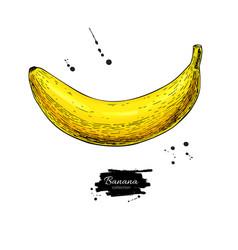 Banana drawing isolated hand drawn object vector