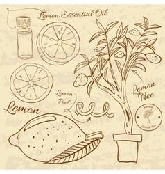 Hand drawn of a lemon set Web vector image vector image