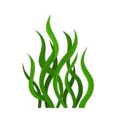 Green algae on white vector