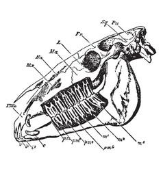 Horse skull vintage vector