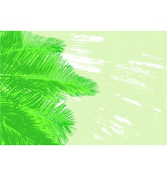 Palm fronds vector