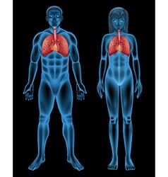 Respiratory System vector