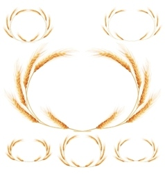Set of 6 detailed wheat ears eps 10 vector