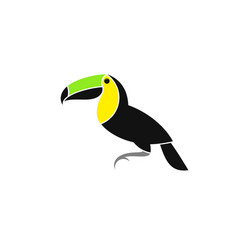Toucan from costa rica vector