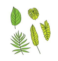tropical leaves 2 vector image