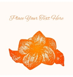 background Hand drawn ink style flower on white vector image vector image