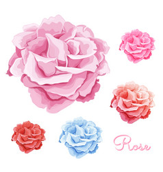 Hand drawn rose blossoms set vector