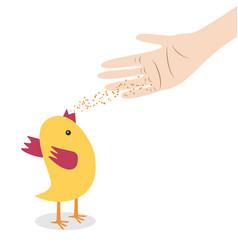 hand feeding chicken vector image