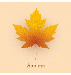 Maple leave with autumn banner vector image