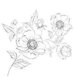 Red poppy flower vector