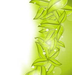 Nature background with eco green leaves vector image vector image