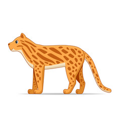 ocelot standing on a white background vector image