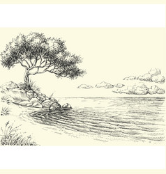 Olive tree on sea shore drawing vector