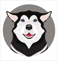 Adorable black and white with blue eyes Husky vector image