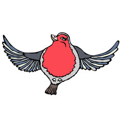 cute adorable red robin bird isolated on a white vector image