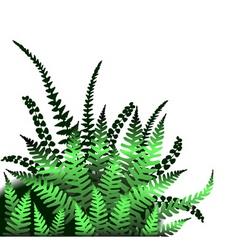 Ferns vector