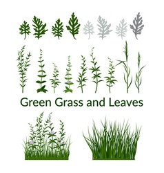 Grass flowers and leaves vector