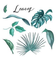 tropical exotic leaves summer set vector image vector image