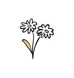 a white chamomile daisy branch sketch style ink vector image