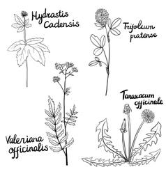 Set of medical plants vector
