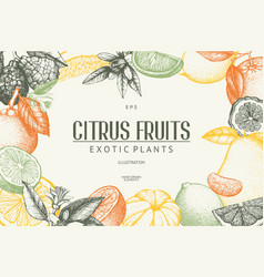 ink hand drawn design with citrus fruits vector image