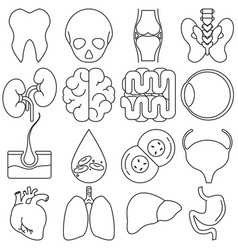 icons of human organs in the style of lines vector image