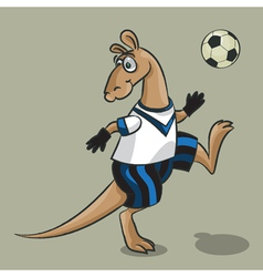 Kangaroo the football player vector image