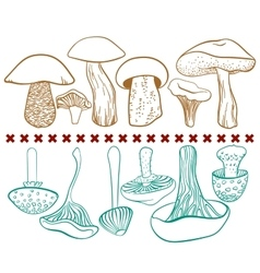 Poisonous and edible mushrooms table on vector