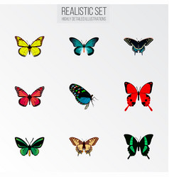set of butterfly realistic symbols with bluewing vector image