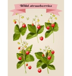 Set of wild strawberries vector