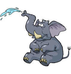 elephant squirting water vector image vector image