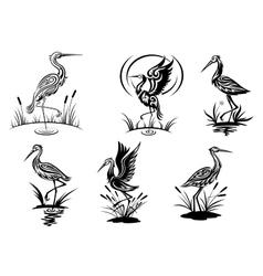 Stork heron crane and egret birds vector image