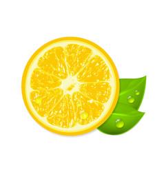 Fresh lemon isolated on white background vector