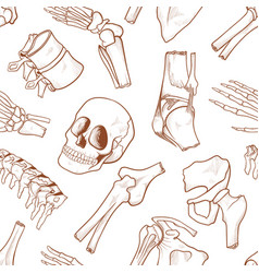human bone background vector image