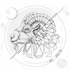 Magic card with astrology aries zodiac sign vector