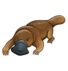 Platypus vector image