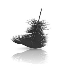 3d realistic falling black fluffy twirled vector