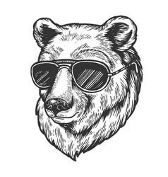 Bear animal in sunglasses sketch engraving vector