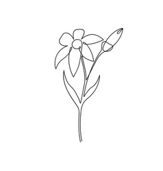 continuous line lily flower lily one line vector image