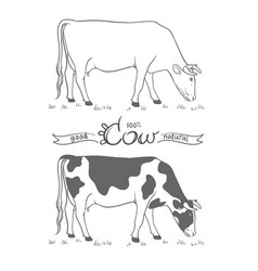 Cow eating grass cow isolated vector