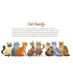 Cute cartoon cats family staing together front vector