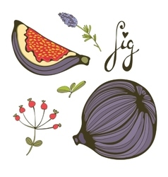 Hand drawn figs vector