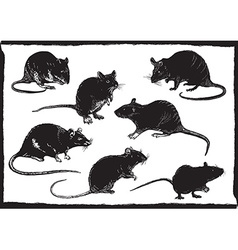 Rats collection freehand sketching vector