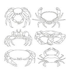 Set of crab icons vector image