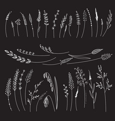 set with cereals grass flowers vector image